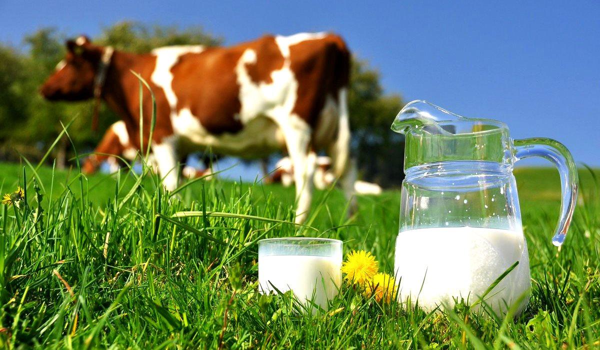 Молоко от коров, питающихся травой